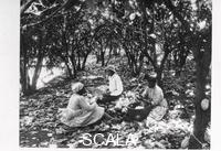 ******** Workers sit on the ground with baskets in a cocoa plantation, Trinidad, Grenada or Venezuela, 1897