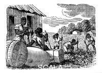 ******** Slaves working on a tobacco plantation, 1833.